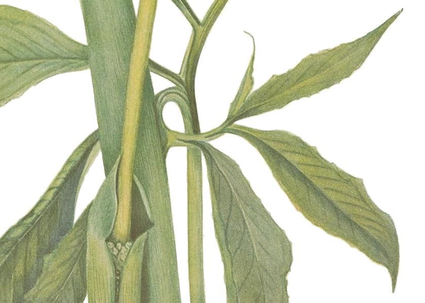 coordinato grafico matrimonio: illustrazione botanica con foglie verdi